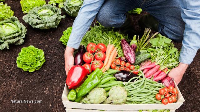 NNews Farmer-Gardener-Harvest-Crops-Vegetables-Soil